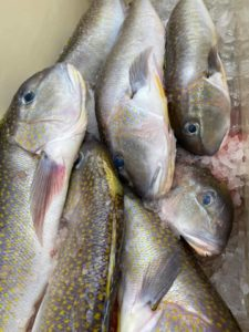 Golden tilefish delivered for curbside puchase in Barnegat Light, N.J. Jeremy Muermann photo.