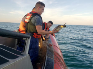 A green turtles is released after being rescued from a gill net near the mouth of the Rio Grande River. Coast Guard photo.