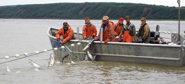 Successful salmon season boosts permit prices, boat sales
