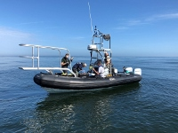 A response team successfully administered antibiotics to the calf Jan. 15 off Florida. Florida Fish and Wildlife Commission/photo taken under NOAA permit 18786-04.