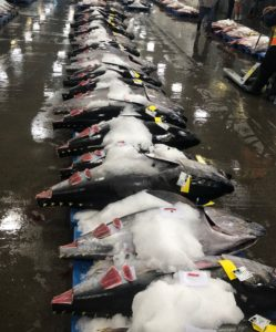 Ahi tuna. Hawaii longliners were hit hard when usual markets for pelagic species froze along with the U.S. restaurant trade. Hawaii Longline Association photo.